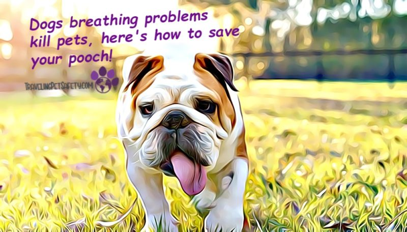 Dog breathing problems in pets
