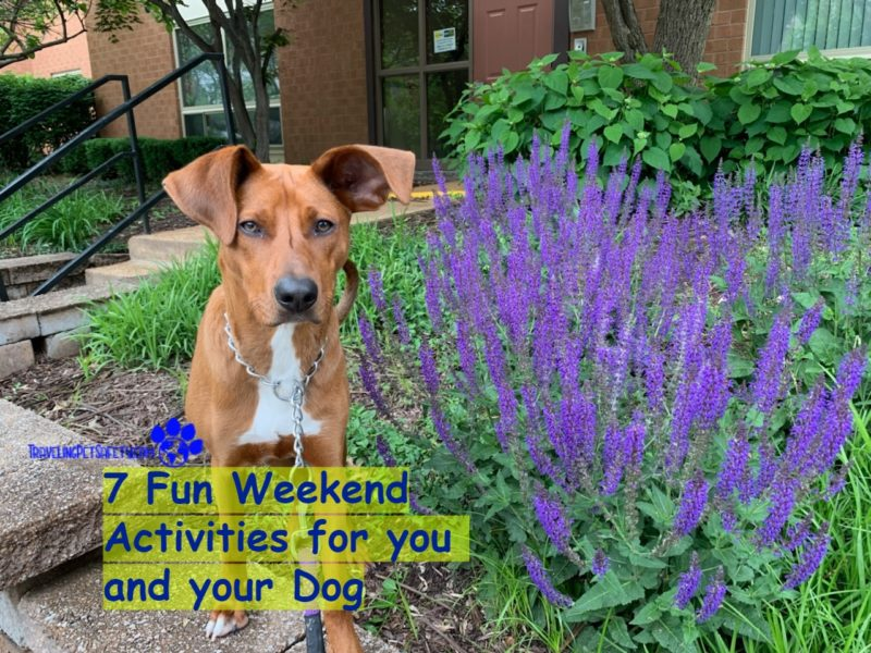 7 Fun Weekend Activities for you and your Dog